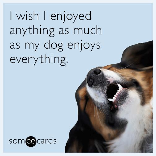 I wish I enjoyed anything as much as my dog enjoys everything.