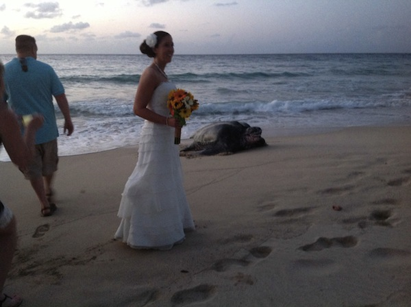 A really big sea turtle crashed a beach wedding.