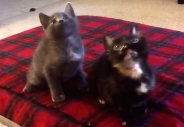 This video of synchronized-dancing kittens is the best dancing kitten video you'll see today.