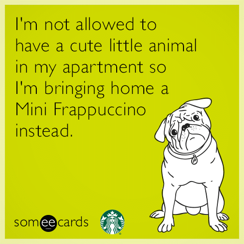 I'm not allowed to have a cute little animal in my apartment so I'm bringing home a Mini Frappuccino instead.