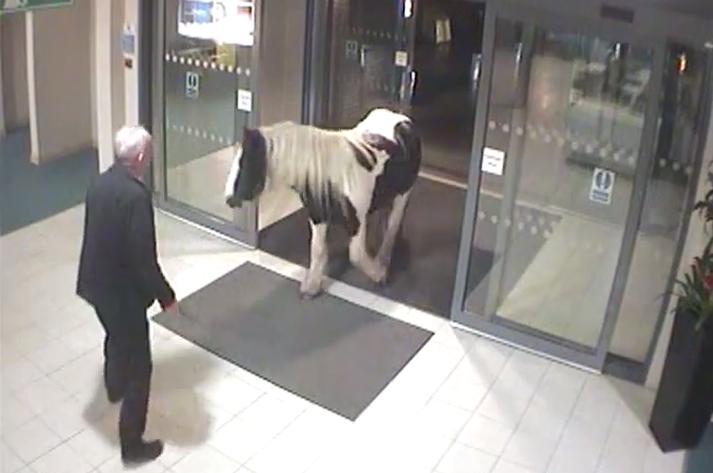 Horse enters police station, gives up and leaves after being refused assistance by local law enforcement.