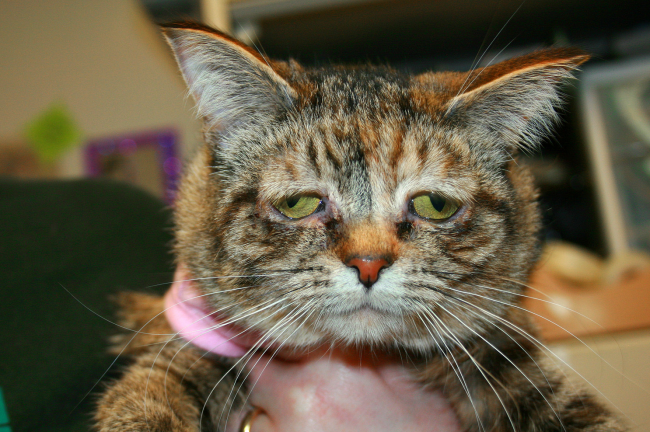Won't somebody please adopt the saddest-looking cat on Earth?