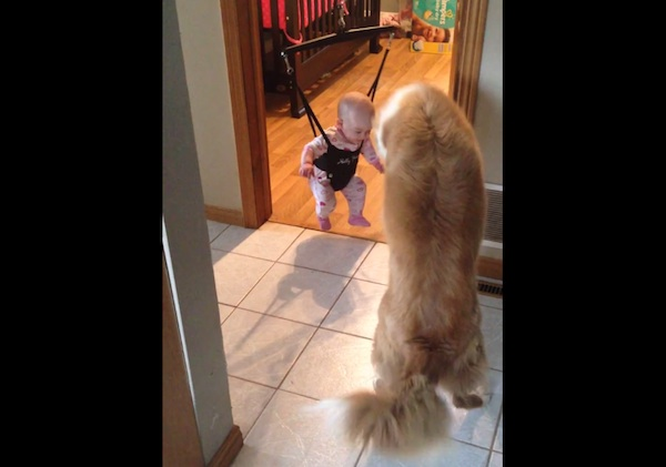 Dog tries over and over to pounce on baby girl's shadow.