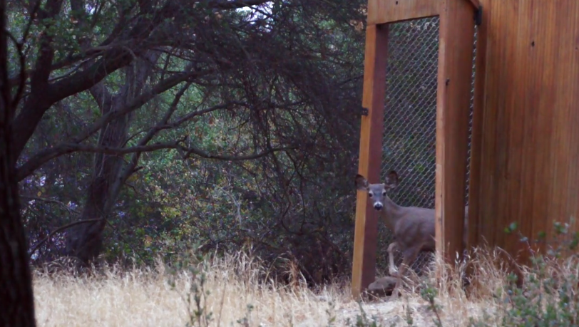 Orphaned fawns are joyfully released back into the wild where they belong.