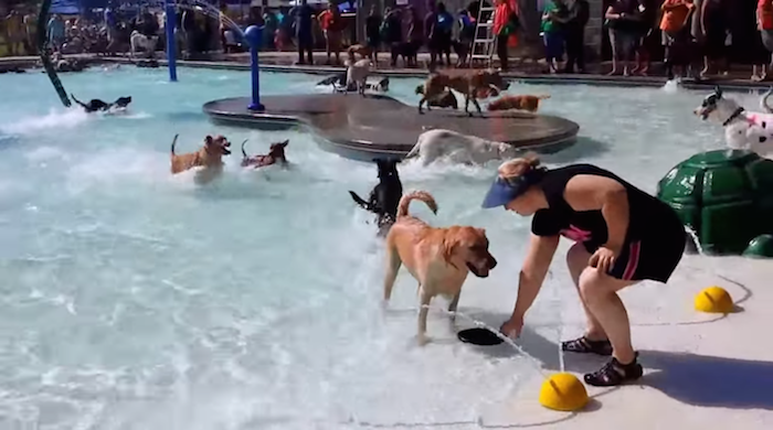 In this town, the last few days of public pools' seasons are reserved for dogs.