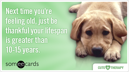 Next time you're feeling old, just be thankful your lifespan is greater than 10-15 years.