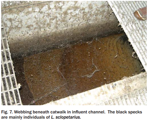 OMG WTF UGH: 4-acre spiderweb blankets warehouse with millions of spiders in urban nightmare.