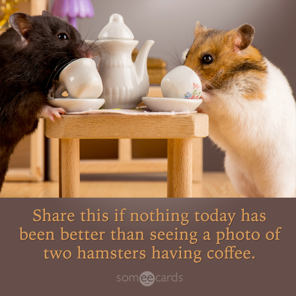 Share this is nothing today has been better than seeing a photo of two hamsters having coffee.