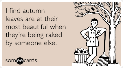 I find autumn leaves are at their most beautiful when they're being raked by someone else.