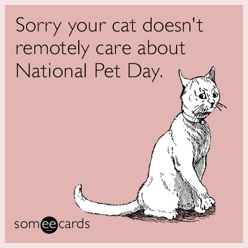 Sorry your cat doesn't remotely care about National Pet Day.