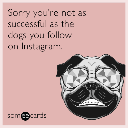 Sorry you're not as successful as the dogs you follow on Instagram.