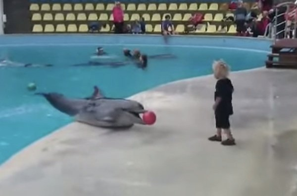 The luckiest little boy in the world played catch with a dolphin.