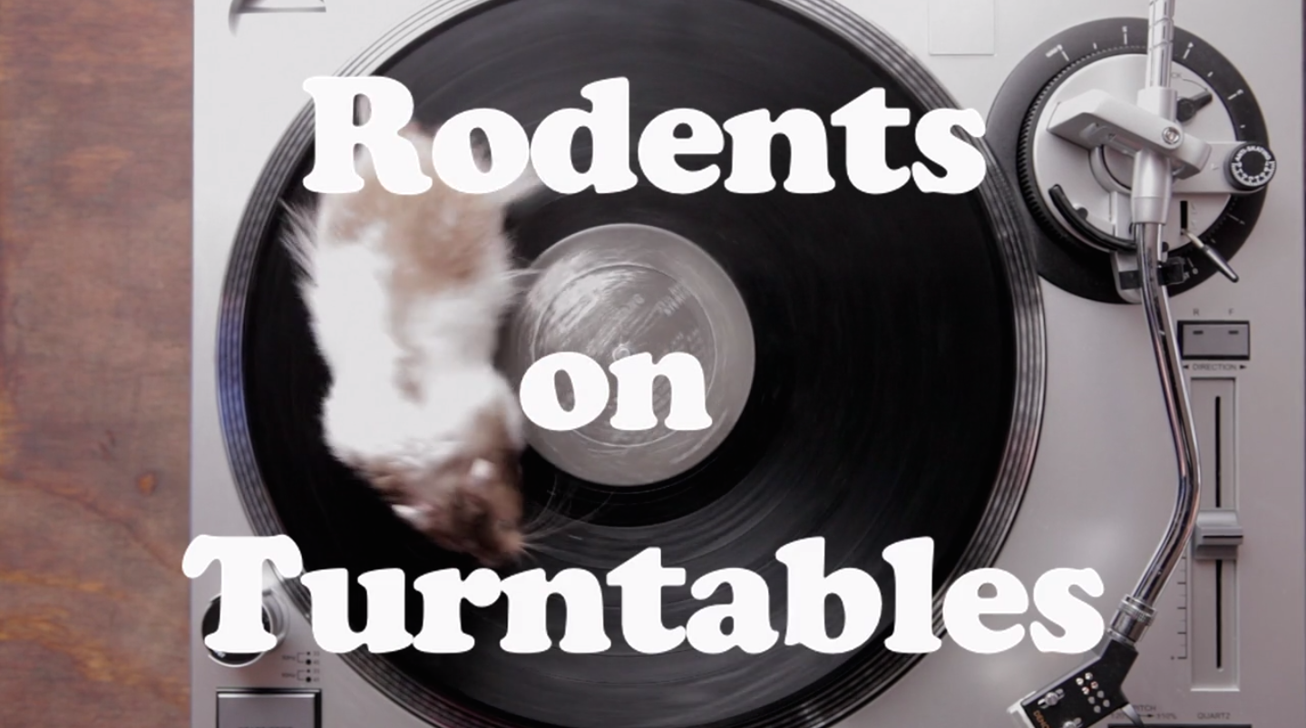 Rodents running on turntables are the best thing to happen to vinyl since hipsters.