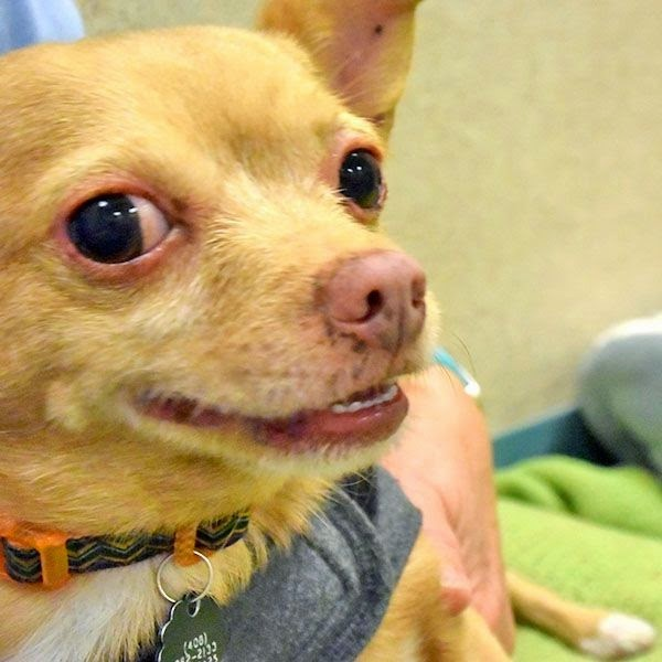 "Humane Society posts extremely honest ad for a little dog who is ""kind of a jerk."""