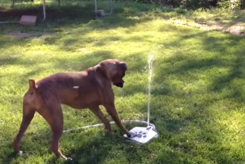 Dog is very, very happy to figure out how her new water fountain works.