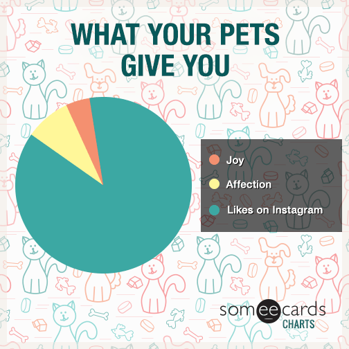 What Your Pet Gives You