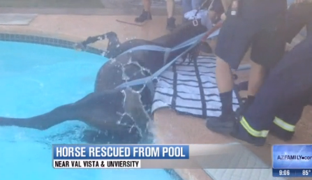 Firefighters rescued a horse from an Arizona swimming pool.