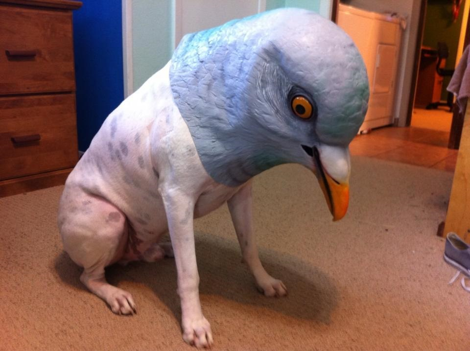 13 reasons why dogs wearing halloween masks needs to become an annual tradition