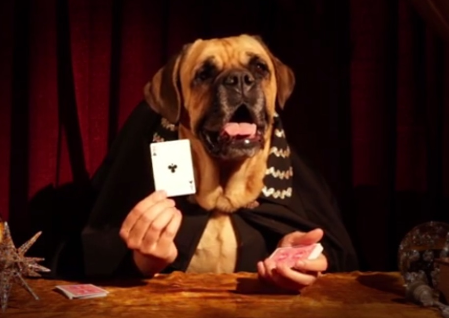 The Great Dogzini performs incredible magic tricks for your amusement.