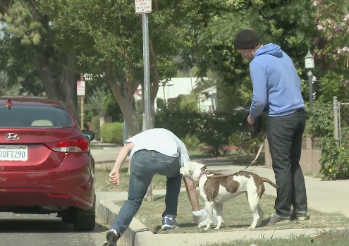 A couple guys steal dog poop from some very confused pet owners.
