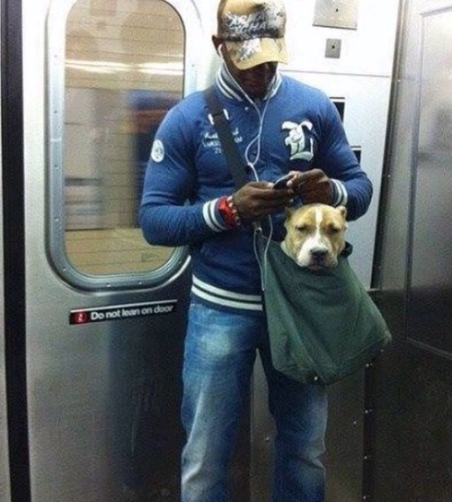 """The NYC subway banned dogs who can't fit in """"small bags."""" Turns out, that can fit a lot of dog."""