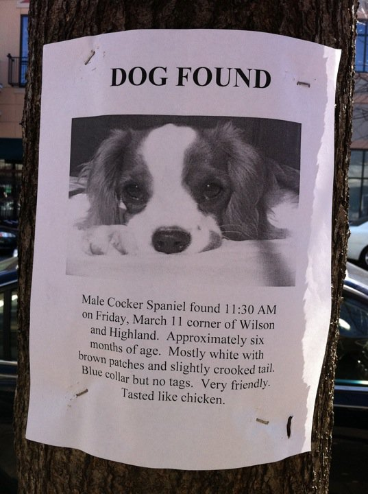 Lost Dog Sign Tastes Like Chicken