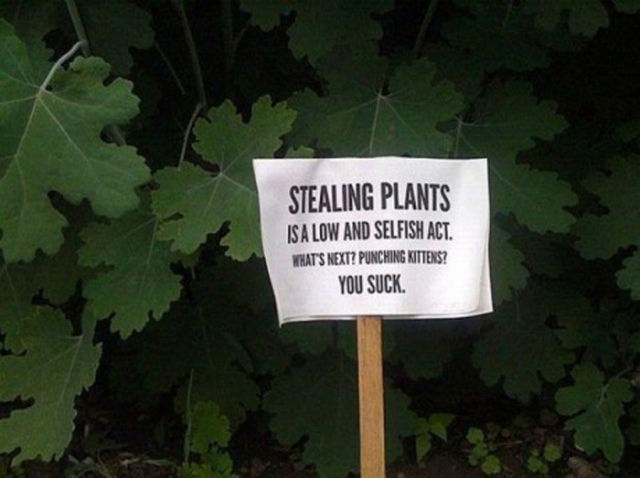 The angriest possible way to protect plants.