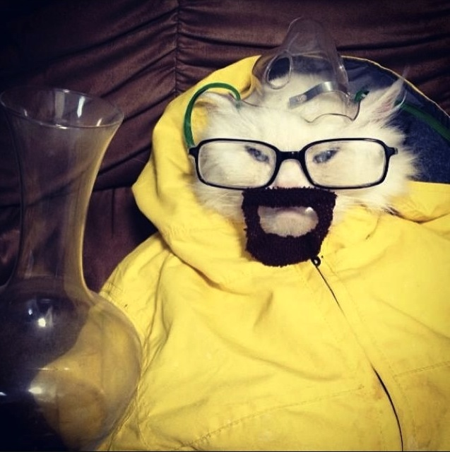 Here's that cat dressed up as Walter White from Breaking Bad you were looking for.