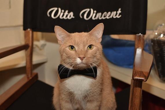 Cat actor steals terrible show.