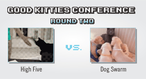 Tournament of Cat GIFs: Results From The 6th Day Of Match-Ups