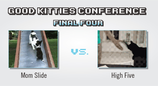 Tournament of Cat GIFs: Results From The 7th Day Of Match-Ups