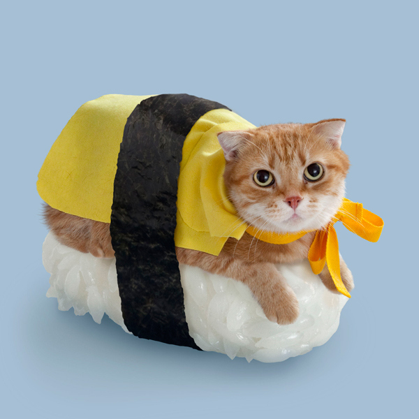 A series of cats dressed up to look like sushi for some reason.