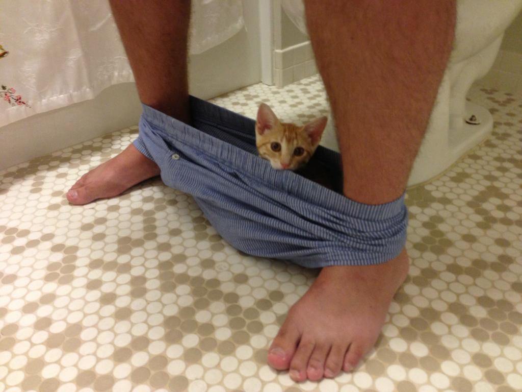 10 animals who don't understand that humans like to be alone in the bathroom.