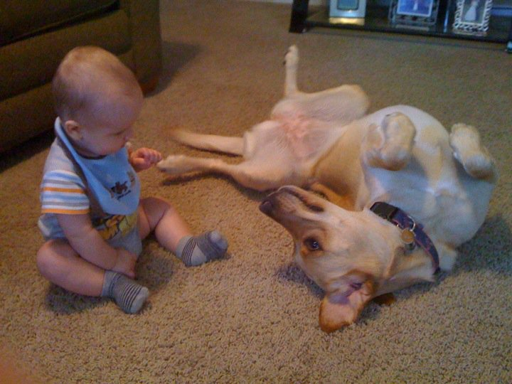 Photographer captures the friendship of a baby boy and his dog over the course of 2 and 1/2 years.