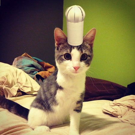 A guy adopted a 3-legged kitten. So he decided to take pictures of him wearing a bunch of tiny, homemade hats.