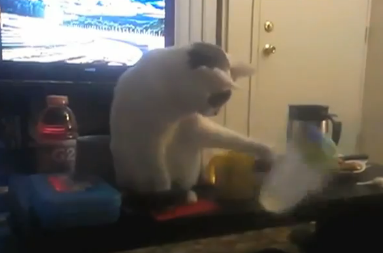 Here are a couple dozen cats knocking stuff over and just generally being total dicks.