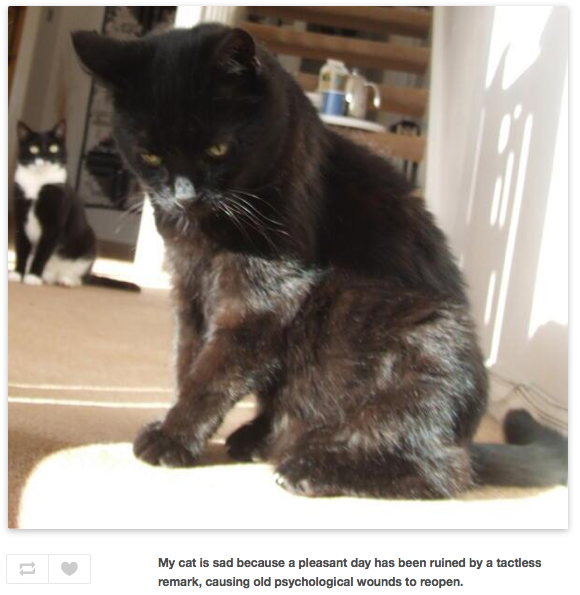 Someone is chronicling all the reasons their sad cat is sad.