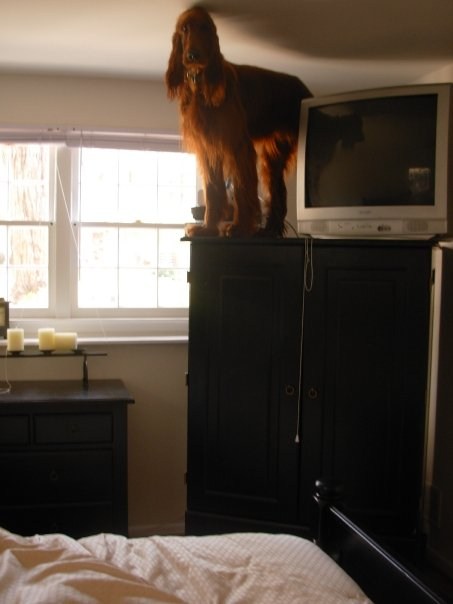 14 pets who like to hang out in really weird places around the house.