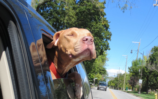 These photos of rescue dogs on their way home for the first time will melt your icy heart.