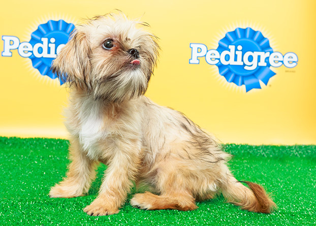 Puppy Bowl X starting lineup has been named. Now with fantasy teams!