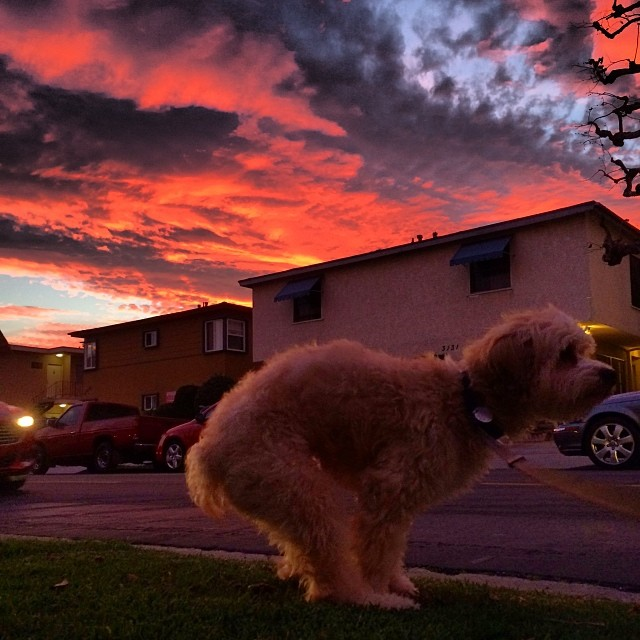 Start your day off majestically with this photo of a dog inspiring us all.