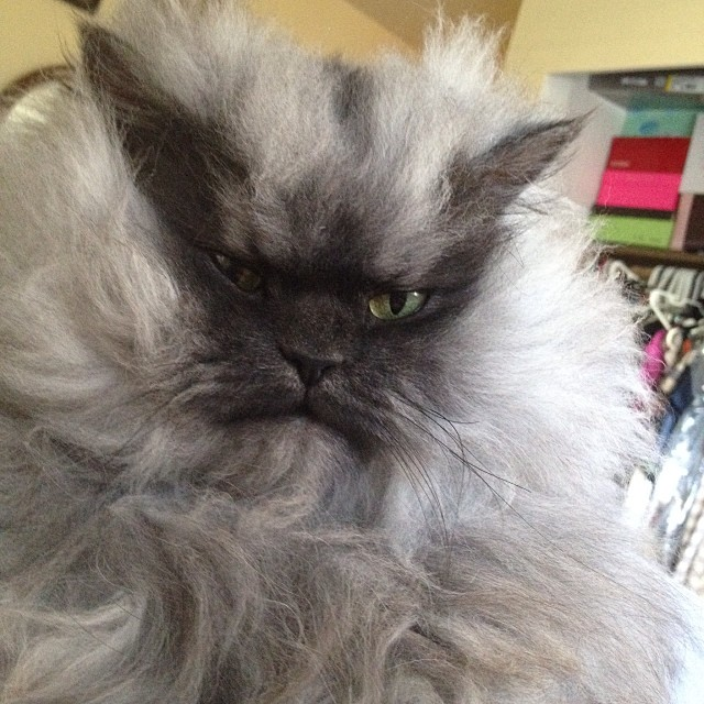RIP Colonel Meow. A look back at the life of an Internet sensation.