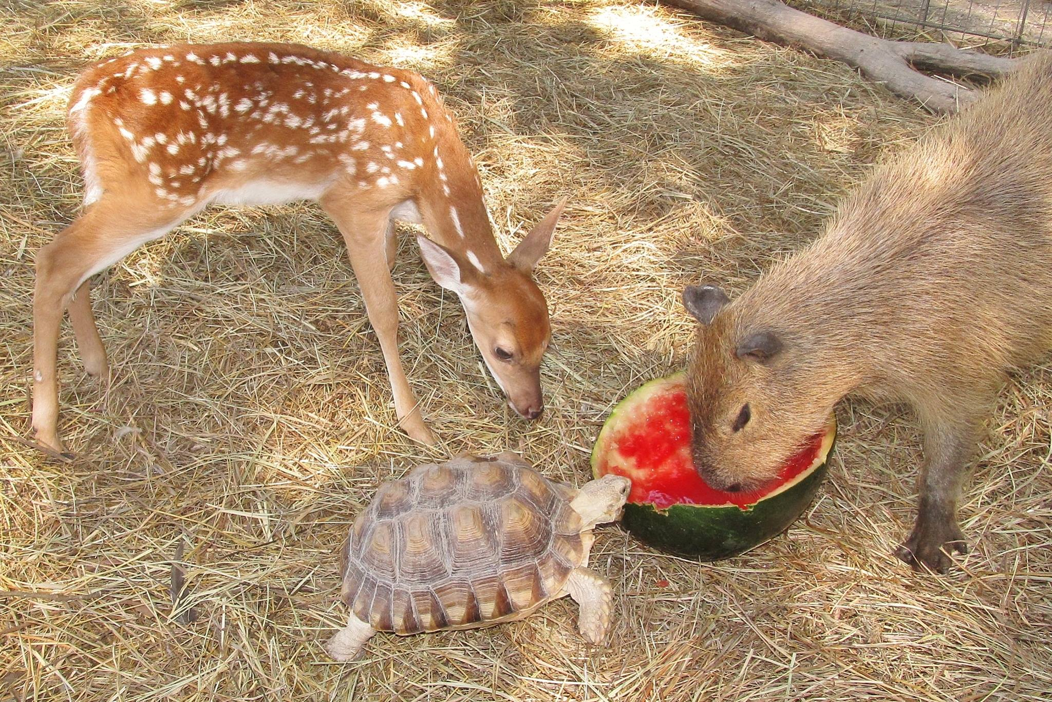 If these amazing interspecies friendships don't melt your heart, you have a heart problem.
