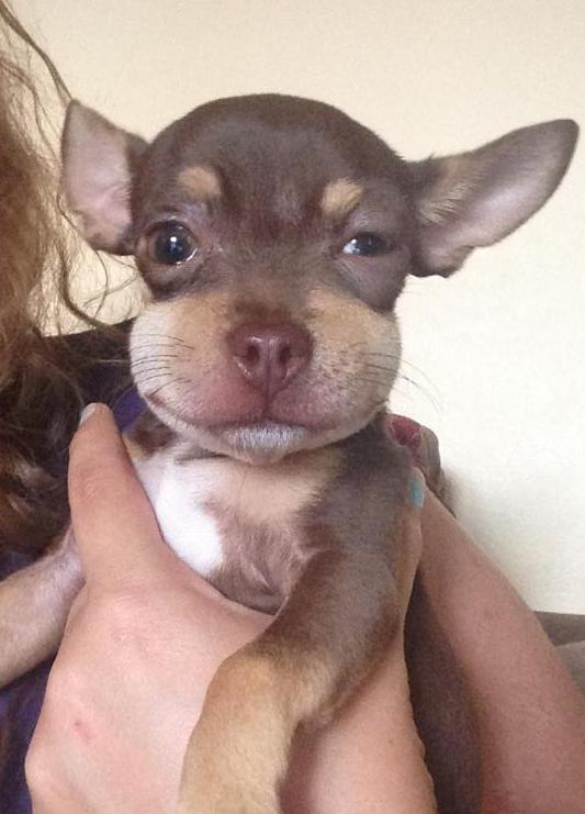 22 brave pets who took on bees and sorta won.