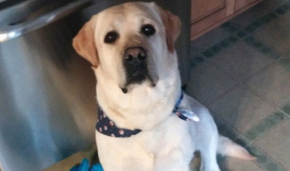 A dog who went missing days before Hurricane Sandy was just reunited with his family.