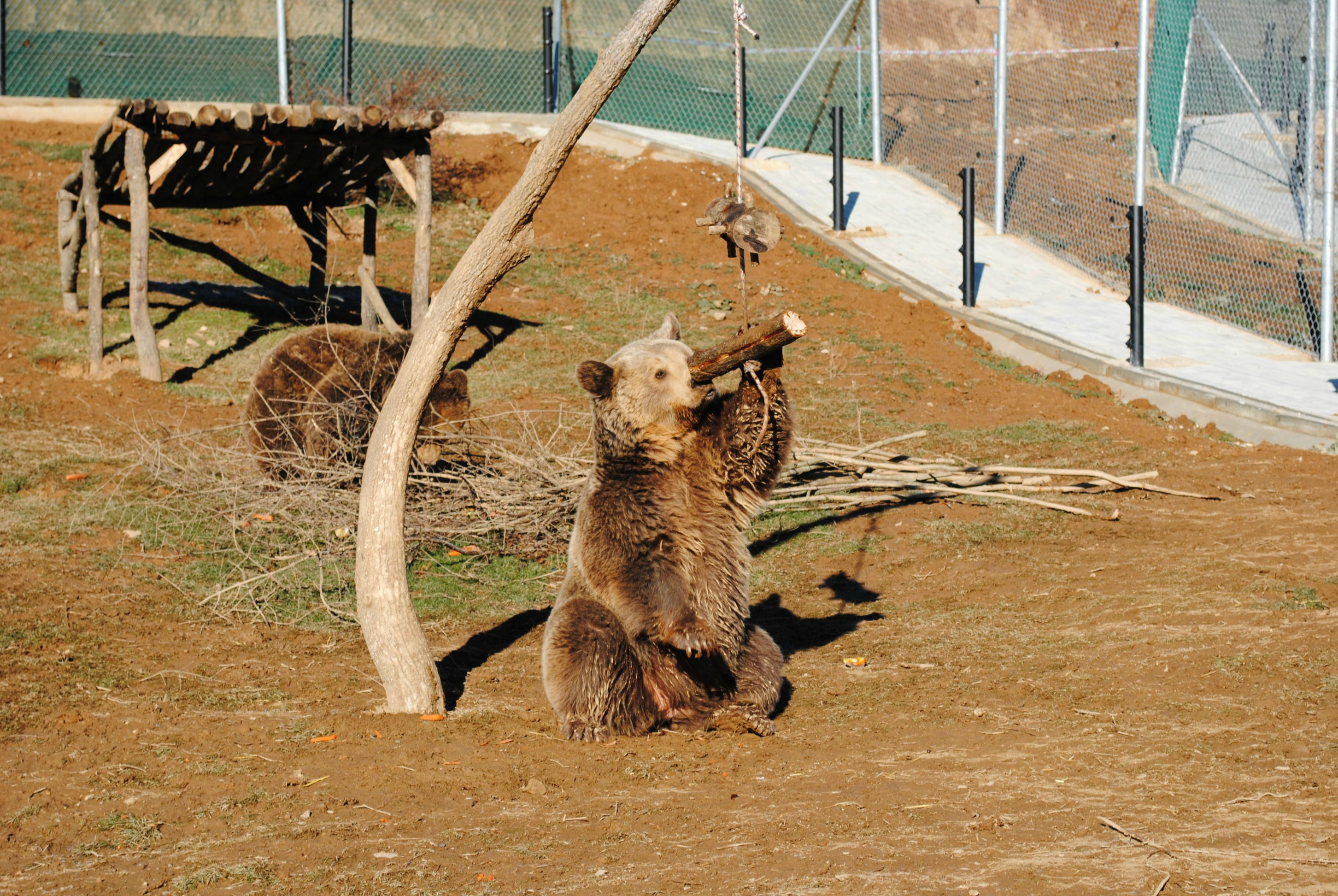 Someone took a cute photo of a bear playing with a piece of wood. Redditors photoshopped it into Internet history.