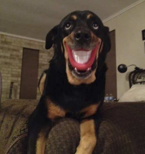 This chew toy really puts a smile on a dog's face.