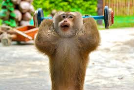 13 animals that are better at working out than you'll ever be.