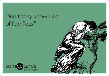 Don't they know I am of few fleas?!