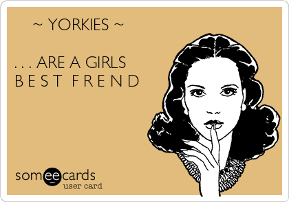 ~ YORKIES ~   . . . ARE A GIRLS  B E S T  F R E N D